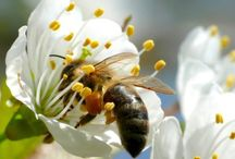 Bees and nature