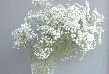 Ecotec Natural Paints / Interior by Ecotec Natural Paints en products