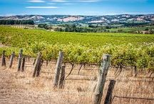 : : McLAREN VALE : : / location ideas for your maternity photography session / by Barebambino