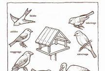 Téma: zvířátka a ptáci v zimě