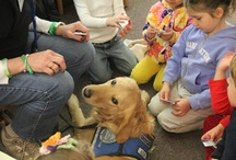 Veterinary news / by dvm360.com