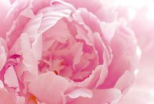 A Passion for Pink... / Romance and Colour