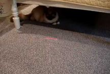 Cats and Laser Pointer Toys