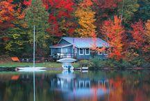 разноцветный лес чюдес