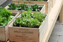 Vegetable Garden Idea in Boxes