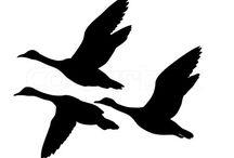 Kuş siluet