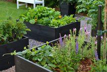 nye ideer til hagen