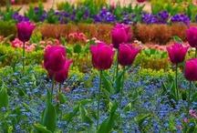 wildflowers / by Brenda Jackson