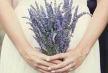 ramos novias campestre