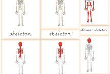 Ľudské telo- BODY
