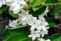 adorable jasmine