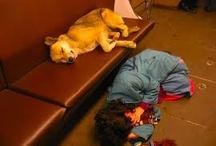 Metro Dogs