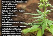 cannabis from marijuana