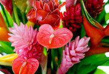 Kwiaty tropic