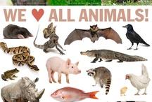 PETA (sauvetage animaux)