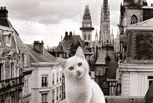 Cats worlds