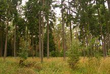 Něco z přírody (Fotky) / Moje fotky nafocené při výletech či náhodně