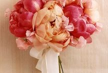 flowers / by Patricia Holjevic