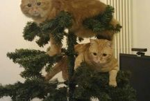 Cats at Christmas time