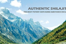 Authentic Shilajit / Lotus Blooming Herbs imports and sells the only real authentic shilajit in the USA. All others are derivatives or less. Our owner travels the Himalayas and goes right to the source visiting local villagers on a motorcycle! The 100% shilajit is imported, purified, and offered for sale at http//www.authenticshilajit.com