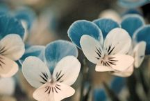 Gardening / by Nancy Chase