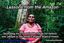 Amazon Stories / The most compelling pictures featuring the stories from the Amazon. More under blog.cifor.org/amazon / by CIFOR - Center for International Forestry Research