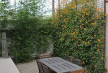 Back Yard Privacy and Design