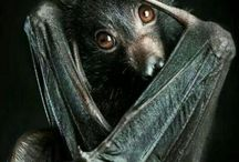 Children of the Night / Even strange gothic beasts have a cute side.