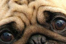 pug love:)