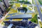 Green Roof Innovation