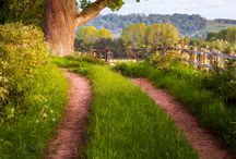Country lane,Herefordshire,England
