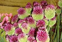 June Flower Favorites