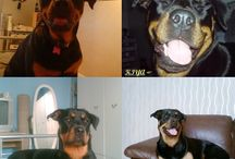 Dogs / All things Dog...   Woof Woof !!