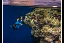 Red Sea - Northern Wrecks and Reefs 2016 / DON'T MISS OUT ON A TRIP OF A LIFETIME!  A specialised adventure experience diving trip in the worlds best dive destination The Red Sea, onboard 5* luxury liveaboard at affordable prices.