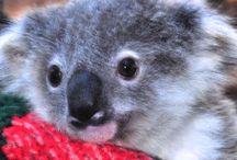 Australian Animals and Their Animal Friends / http://amzn.to/1mj5GPb