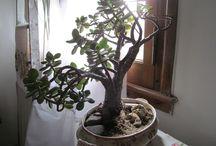 Plantas en sopera