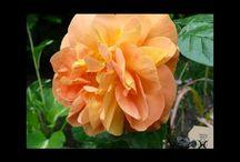 Ogród - garden / ulubione fotki, natura-rośliny w moim obiektywie