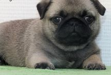 puppys♥♥♥♥♥