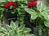 gröna växter ute