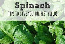 Garden / Gardening tips, ideas, DIY, etc