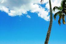 Dovolenka feb. 2016 / Dominicana rep. Bayahibe beach