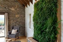 Green wall, decorative and healthy