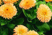 Biljke / by Radionica prirode