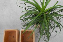Garden Centre Viveros González / En este tablón encontraras fotografías de nuestras instalaciones.