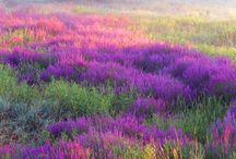 den farverige natur
