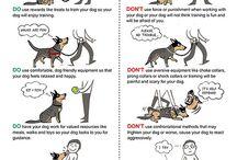 Dog Training & Behavior Hacks