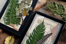 Картины из гербария