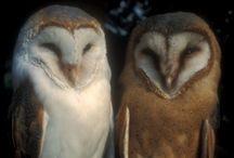 owls / by Cori Allen-Roy
