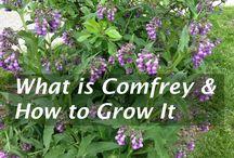 Gardening ideas & to dos...