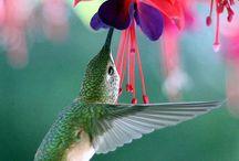 garden wishes